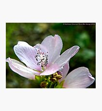 Tiny Pink Flower Photographic Print