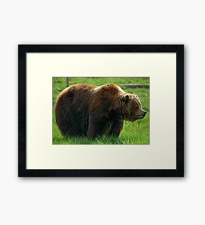 Big Hungry Guy Framed Print