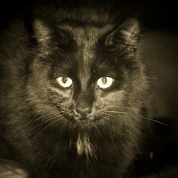 Black Cat by daverach1