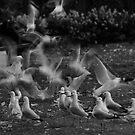 Gulls Galore by jesskato