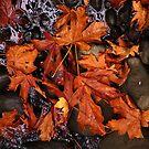 Autumn Leaves On a Pond by Jann Ashworth