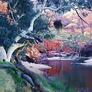 The Waterhole, Ormiston Gorge by Michael John