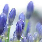 Blue Buds by Margi