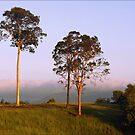 Gum Trees by Joy Rensch