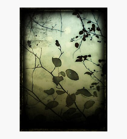 Through a Glass Darkly Photographic Print