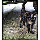 Trailer Cat by Fiona Mouzakitis