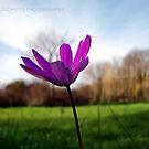 Autumn Bloom by Fiona Mouzakitis