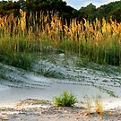 Beach Walk by Eileen McVey