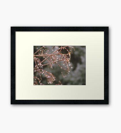 Diamond Tree Framed Print