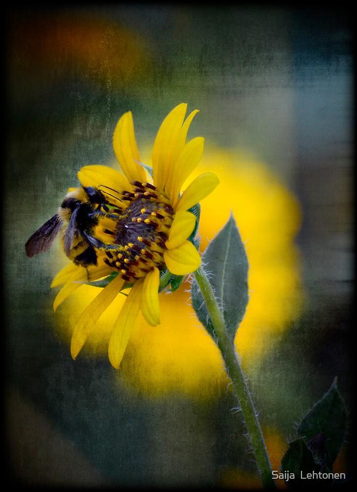 Beeeautiful  by Saija  Lehtonen
