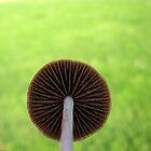 Mushroom by chiaraggamuffin