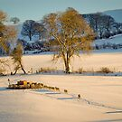 Welsh Winter Sunlight. by PhillipJones