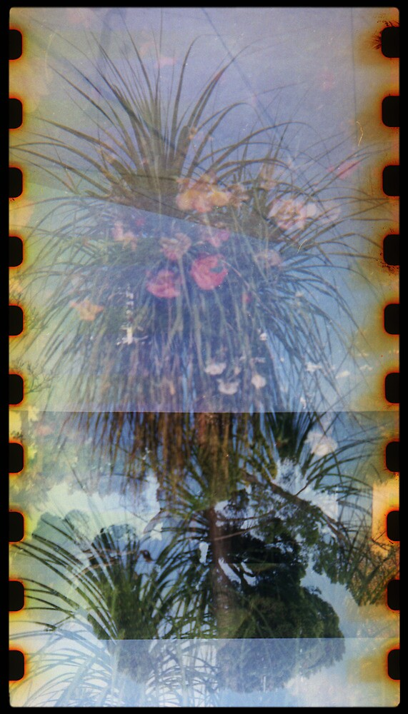 the palm flower by Jill Auville