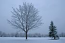 Snow Trees by Gene Walls