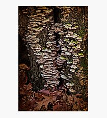 Shelf Fungus In Autumn Photographic Print