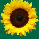 OneSunflower by ProfessorM