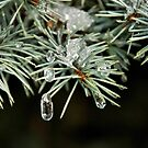 Ice Ice Baby by Debra Fedchin
