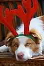 Santa's Reindeer by Extraordinary Light