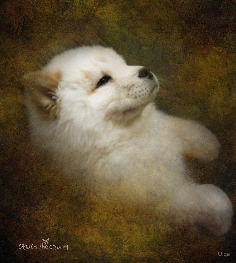 Chow pup by Olga