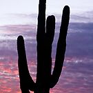 Giant Saguaro Cactus Silhouette and Sunrise Sky by Bo Insogna