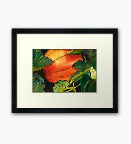 October Pumpkin Framed Print