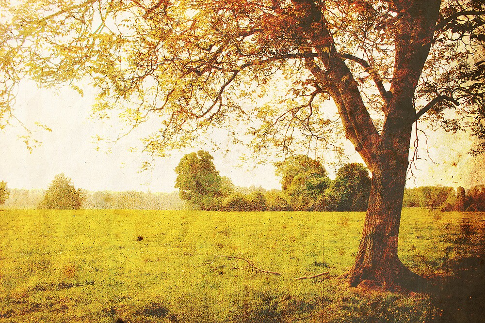 Fields of Gold by James Taylor