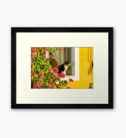 Enjoying The Sun Framed Print