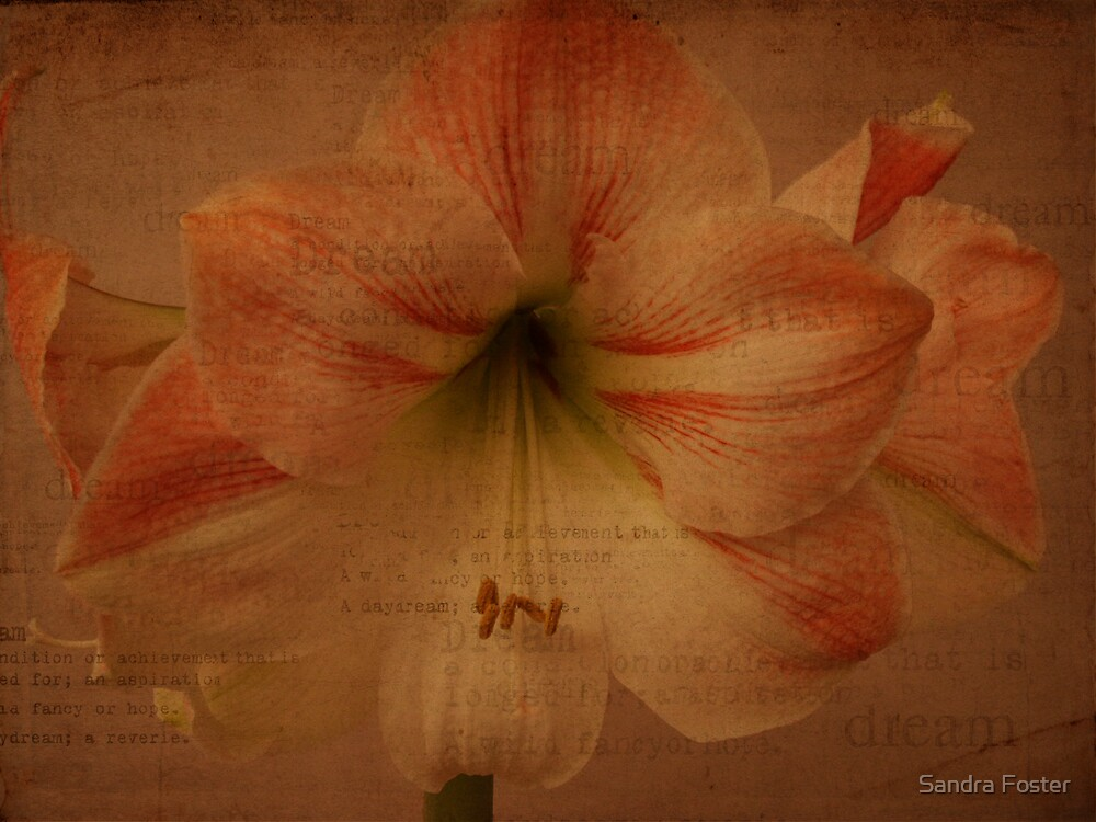 Amaryllis Lily With Dream Texture by Sandra Foster