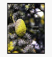 Yuletide greetings Photographic Print