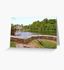 Peacock at Johnstown Castle  Greeting Card