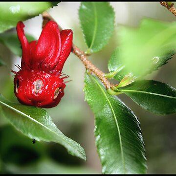 A Flower From Wonderland by lilliputian