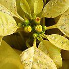 Walmart Flowers by WildestArt