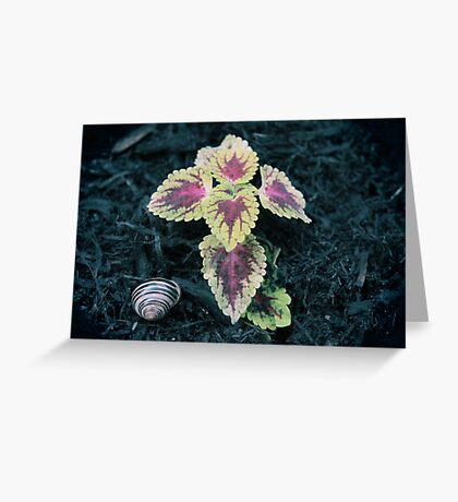 Shelter Me Greeting Card