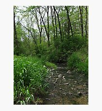 Spring Forest Stream Photographic Print