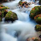Autumn on Wahkeena Creek I by Tula Top