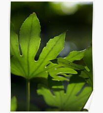 Nature Series 1 Poster