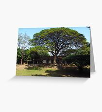 Eco Tree Greeting Card
