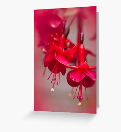 All Red Greeting Card