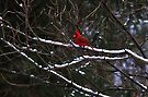 Standing Out in Winter by Elaine Manley