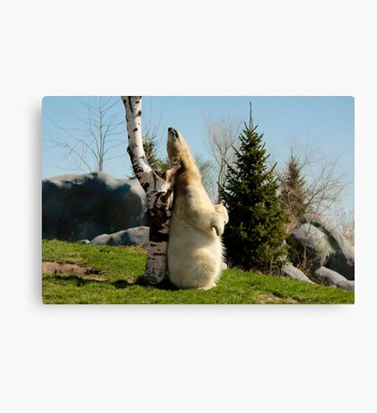 Scratch That Itch! Canvas Print