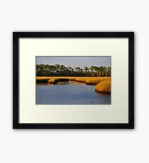 Salt Marsh Framed Print