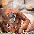 Mama orangutan and baby by Sarah Van Geest