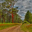 ''Stock route off the Dawson Highway. Queensland'' by bowenite