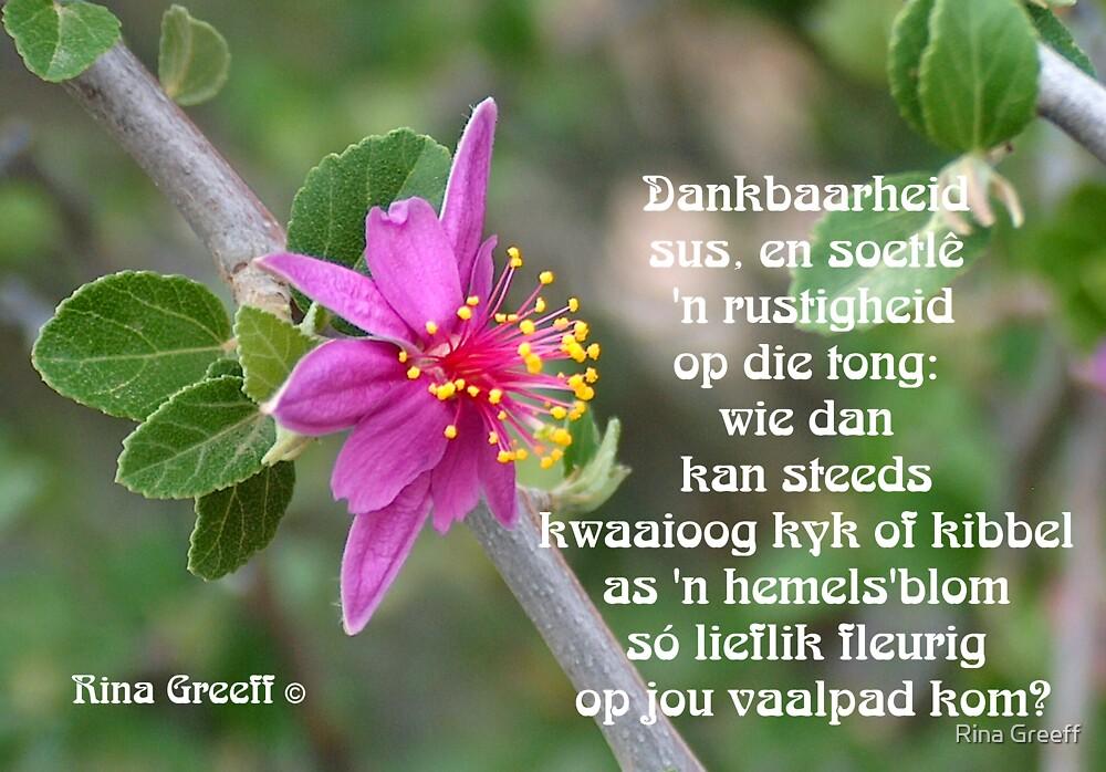 Quot Dankbaarheid Quot By Rina Greeff Redbubble