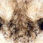 Wolf Eyes by Jarede Schmetterer