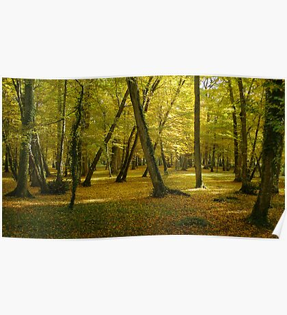 Autumn in the forest of Chenonceau Poster