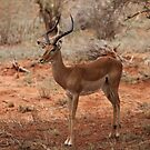 Stockstill Impala by BlackhawkRogue
