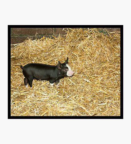 Piglet Photographic Print