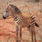 Stripey Infant by BlackhawkRogue