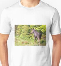 Bull Moose in Maine T-Shirt